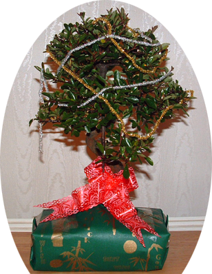 Gift Wrapped Bonsai Trees
